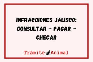 Infracciones en Jalisco - Consulta en línea