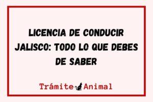 Licencia de Conducir en Jalisco