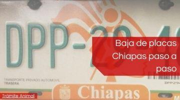 Baja de placas Chiapas