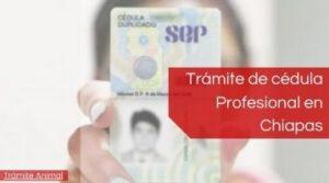 Cédula profesional Chiapas