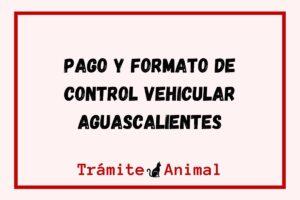 Control Vehicular Aguascalientes