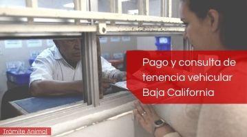 Pago de tenencia vehicular Baja California