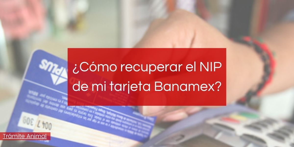 ¿Cómo recuperar NIP de mi tarjeta Banamex?