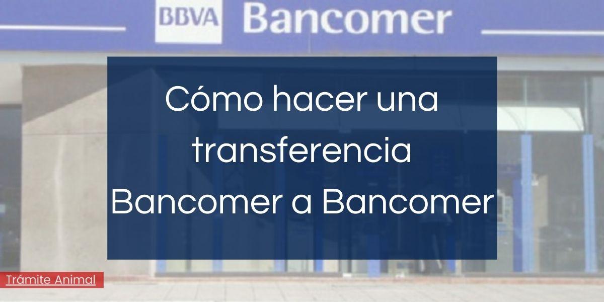 Cómo hacer una transferencia Bancomer a Bancomer