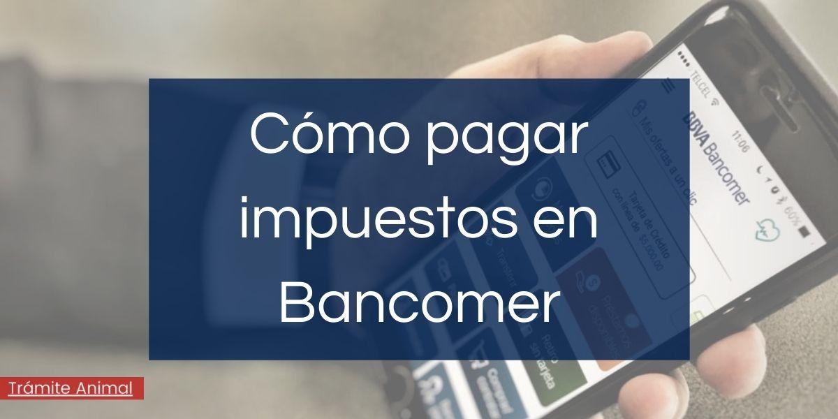 Cómo pagar impuestos en Bancomer