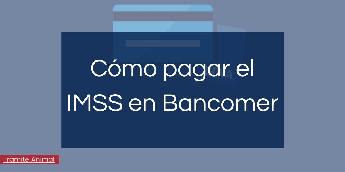 Cómo pagar IMSS en Bancomer